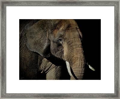 Strength  Framed Print by Paul Neville