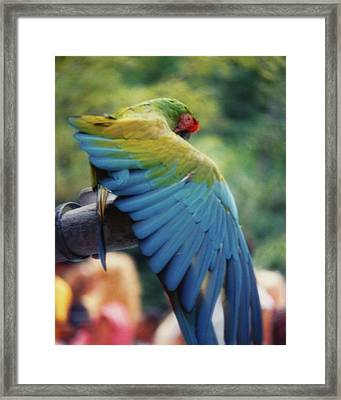 Stretch Your Feathers Framed Print by JAMART Photography