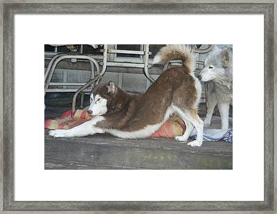 Framed Print featuring the photograph Stretch 'n Sniff by Lynda Dawson-Youngclaus