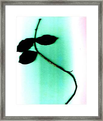 Stretch Framed Print by Slade Roberts