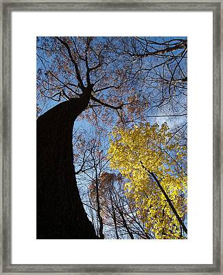 Stretching Framed Print by Jacob Stempky
