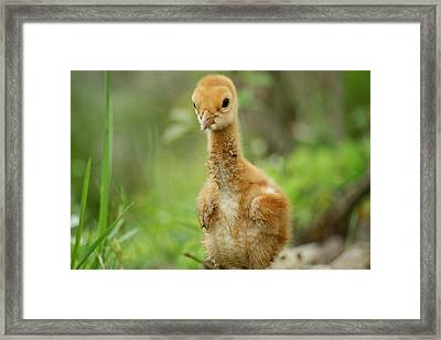 Strike A Pose Framed Print by Dawn Williams