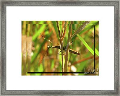 Framed Print featuring the photograph Strike A Pose by Deborah Johnson