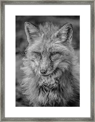 Striking A Pose Black And White Framed Print