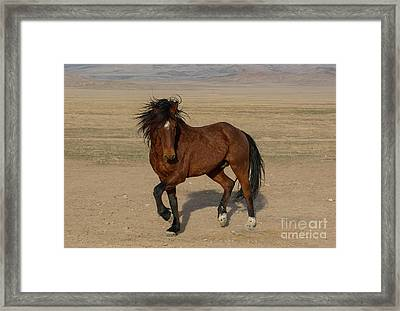 Striking A Pose Framed Print by Nicole Markmann Nelson