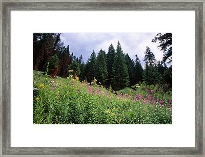 Striking Beauty Framed Print by Soli Deo Gloria Wilderness And Wildlife Photography