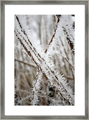 Striking Hoarfrost Framed Print by Carol Groenen