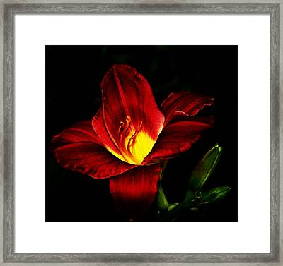 Striking Pose Framed Print