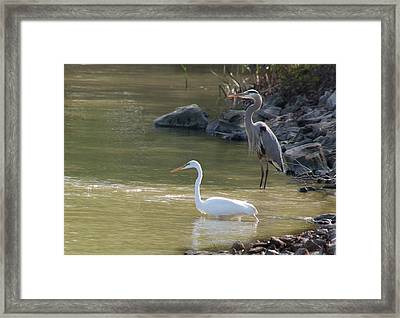 Framed Print featuring the photograph Striking Profiles by Kathleen Stephens
