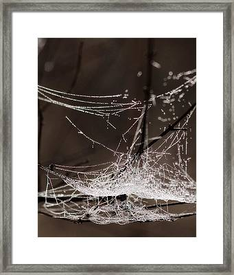 String Of Pearls 1 Framed Print