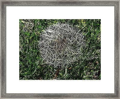 String Theory Dandelion Framed Print by Craig Walters