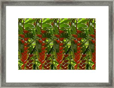 Strings Of Flower Heliconias Are One Of The Most Colorful And Beautiful Flowers Framed Print by Navin Joshi