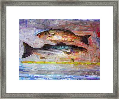 Striped Bass Keepers Framed Print by Wingsdomain Art and Photography