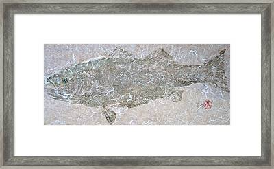 Striped Bass On White Thai Unryu  Framed Print