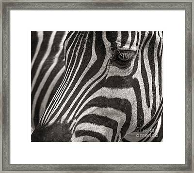 Striped Beauty Framed Print