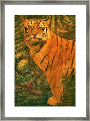 Striped Cat Framed Print by Jack Zulli