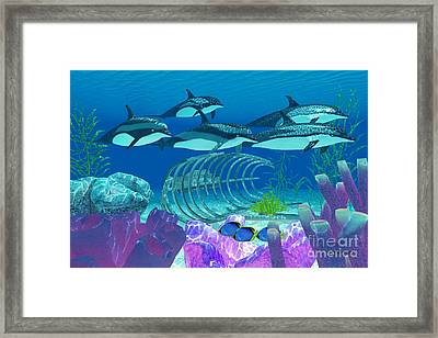 Striped Dolphin And Wreck Framed Print