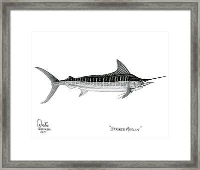Striped Marlin Framed Print