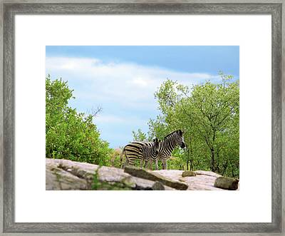 Mama, Who's That Idiot Taking My Picture? Framed Print