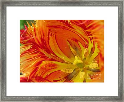 Striped Parrot Tulips. Olympic Flame Framed Print by Ausra Huntington nee Paulauskaite