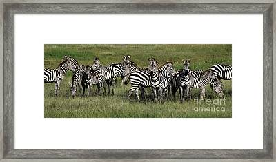 Stripes - Serengeti Plains Framed Print