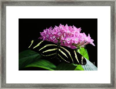 Stripes And Flowers Framed Print