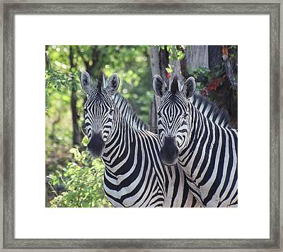Stripes And Ovals Framed Print