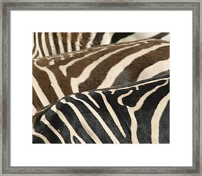 Stripes Framed Print by Donald Tusa