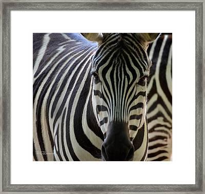 Stripes Framed Print by Maria Urso
