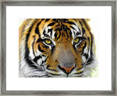 Stripes, No. 26 Framed Print