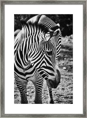Stripes  Framed Print by Saija  Lehtonen