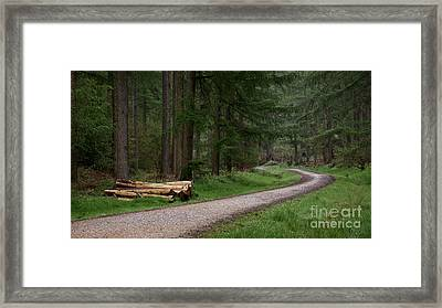 Stripped And Ready Framed Print