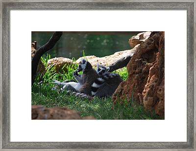 Strips Framed Print by Lakida Mcnair