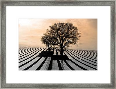 Stripy Evening Framed Print by Jez C Self