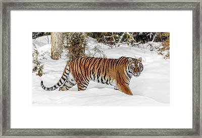 Stroll In The Snow Framed Print by Wes and Dotty Weber