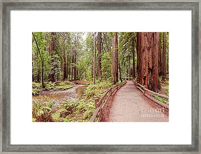 Strolling Along Redwood Creek At Muir Woods National Monument - Mill Valley Marin County California Framed Print by Silvio Ligutti