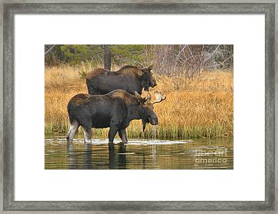 Strolling And Dripping Framed Print