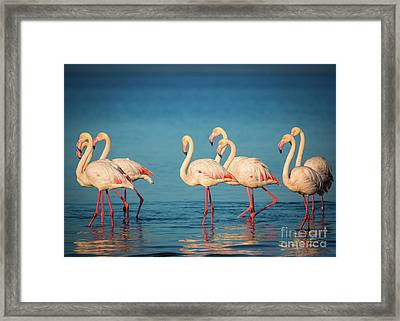 Strolling Flamingos Framed Print by Inge Johnsson