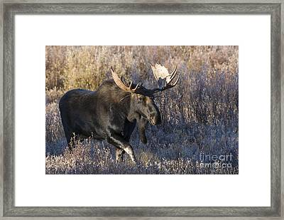 Strolling Through The Willows Framed Print by Sandra Bronstein
