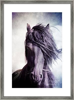 Strong Friesian Stallion Framed Print by Jan Brons