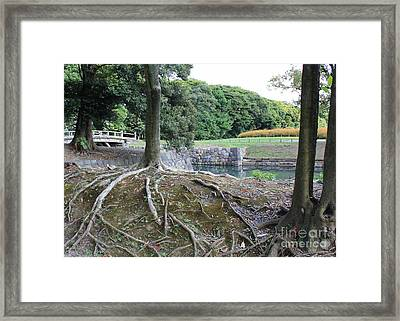 Strong Roots In Japan Framed Print by Carol Groenen