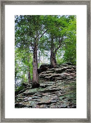 Strong Roots Framed Print by Kristin Elmquist