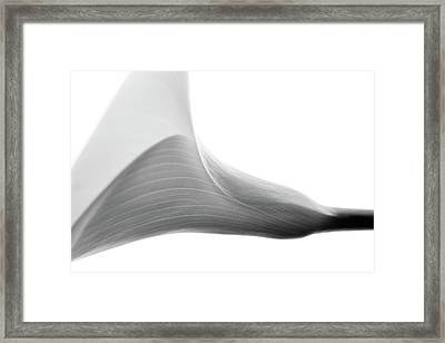 Structure Framed Print by Rebecca Cozart