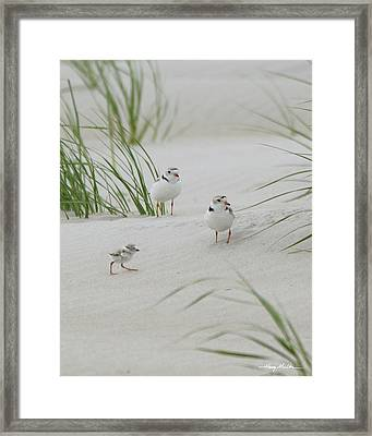 Struggle In The Blowing Sand Framed Print