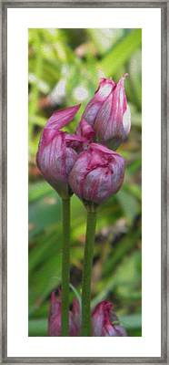 Framed Print featuring the photograph Struggle To Bloom by Manuela Constantin