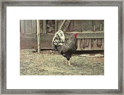 Strut Framed Print by JAMART Photography