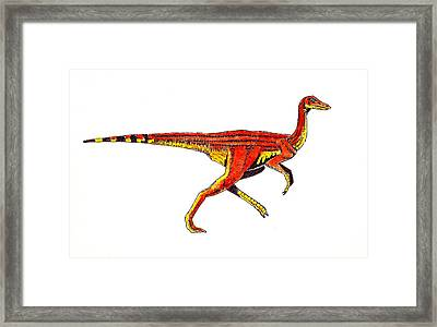 Struthiomimus Framed Print