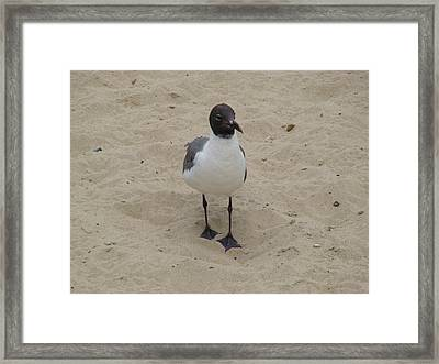 Framed Print featuring the photograph Struttin' Seagull  by Charles Kraus