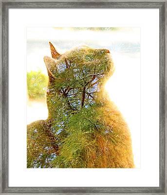 Stuck In Cat Framed Print
