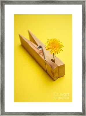 Stuck On Summer Framed Print by Jorgo Photography - Wall Art Gallery